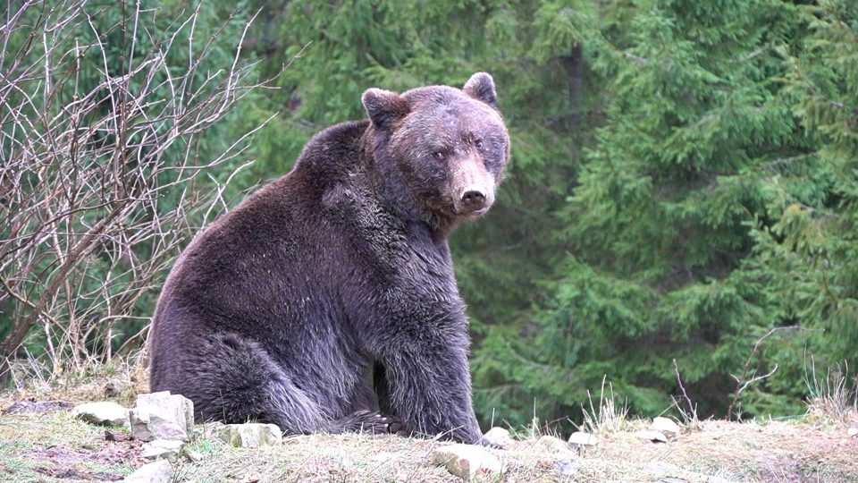 Ведмеді Монтаж.00 00 03 47.still004