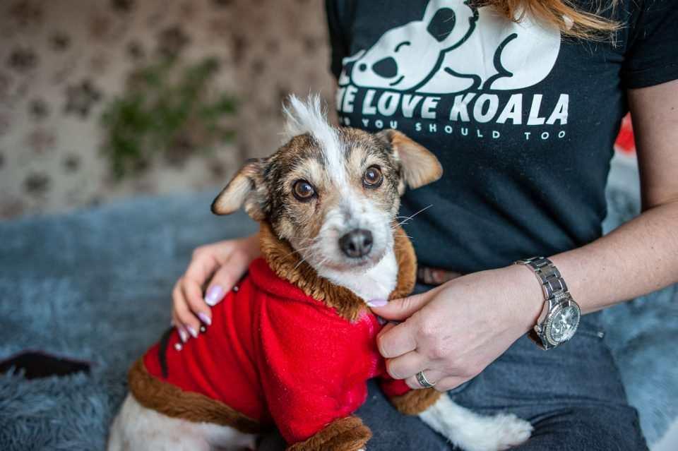 Боротьба за життя: 5 неймовірних історій про тварин з ужгородського притулку Барбос, фото-21